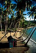 Playa Anadel, Samana, Dominikanische Republik Karibik
