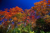 Autumnal trees under blue sky, New England, USA, America