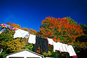 Clothesline and autumnal trees under blue sky, Maine, USA, America