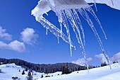Winter landscape with icicles, Werdenfelser Land, Garmisch-Partenkirchen, Upper Bavaria, Bavaria, Germanynd