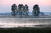 Fluvial topography at dawn, Biebrza, Poland, Europe