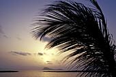 Palm tree and ocean at sunset, Baia de Murdeira, Sal, Cape Verde, Africa