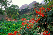 Mountain landscape and vegetation, Paul, Santo Antao, Cape Verde, Africa