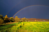 Canola field under a rainbow at a stormy atmosphere, Altmuehltal, Upper Bavaria, Bavaria, Germany