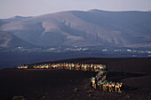 Camels for tourists from Yaiza, Lanzarote Timanfaya National Park, Canary Islands, Spain