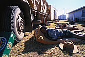 Boxer Lizard sleeping in front of truck, Fred Brophys Boxing Troupe, Queensland, Australia