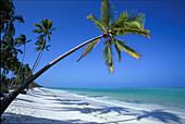 Idyllic palm beach under blue sky, Zanzibar, Tanzania, Africa
