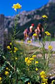 Group of cyclists, valley of Orient, Serra de Tramuntana, Majorca, Spain