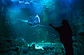 Great Barrier Reef Aquarium, Darling Harbour, Sydney NSW, Australia