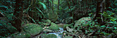 Tropic Rainforest, Daintree National Park, near Mossman Queensland, Australia
