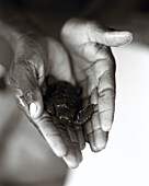 Holding a Turtle, Cape Verde
