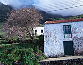 Typical houses with almond tree, Las Lapas, La Frontera, El Golfo, El Hierro, Canary Islands