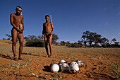 Two bushmen from the San showing an old ostrich nest, Intu Africa Kalahari Game Reserve, Namibia, Africa