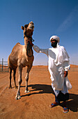 Valuable racing camel, worth millions, with owner, Camel Breeding Station in Al Ain, Emirat Abu Dhabi, United Arab Emirates, UAE