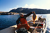 Fisherman with plaice in a boat, Jakobselv, Varangerfjord, Finnmark, Norway, Europe