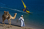 Man leading camel, windsurfer in the background, Beach scene, Egypt