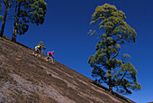 Two people on a mountain bike tour riding downhill, MTB Tour, Teneriffe, Canary Islands, Spain, Fully Released