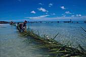 Coconut Leaf Fishing, Yoroma Island Yasawa Islands, Fiji