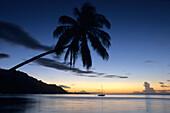 Coconut Tree & Yacht at Dusk, Moorea French Polynesia