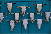 Cattle Skulls, Featherston Trading Co., Ranchos de Taos, New Mexico USA