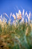 Dannebrog Flag behind sand dunes, Blovand, Southern Jutland, Denmark
