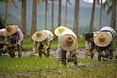 Reisbauern, Insel Hainan Sued-China