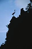 Egret, El Nido, North Palawan Philippines