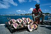 Shell vendor, Habour, Naussau Bahamas