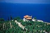 Weinanbau im Westen, Isola d´Elba, Toskana, Italien