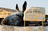 Sign of private hunting area, donkey, Menorca, Minorca, Balearic Islands, Spain
