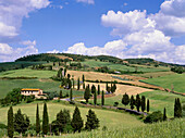 Street with cypresses, Val d'Orcia, Tuscany, Italy