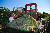 Vintage, Wine, Chianti, Tuscany, Italy