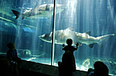 Tourists watching the sharks in an aquarium, Two Oceans Aquarium, Cape Town, Western Cape, South Africa