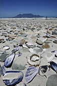 Shells and stones on the beach, Bloubergstrand, Western Cape, South Africa