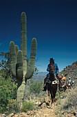 Saguaro cactus with cowboys, Arizona USA