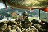 Mother with child behind an aquarium, Restaurant, St Bartholomae, Lake Koenigssee, Berchtesgaden, Bavaria, German