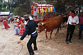 Pilgrim with oxen and oxcart, Romeria de San Isidro, Nerja, Costa del Sol, Malaga province, Andalusia, Spain, Europe
