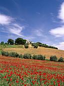 Mohnblumen, idyllische Hügellandschaft und das Dorf Montefrio, Provinz Granada, Andalusien, Spanien, Europa
