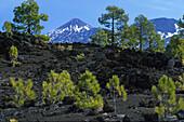 Pico de Teide 3718m from Pinar de Chio, Tenerife, Canary Islands, Spain