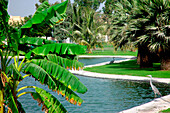 Pond with palm trees and herons at Safa Park, Dubai, UAE, United Arab Emirates, Middle East, Asia