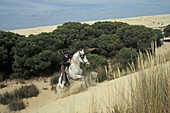 Pilgrim on horseback at national park Donana, Romeria El Rocio, Province of Huelva, Andalusia, Spain, Europe