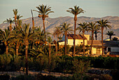 Landhaus, Palmenhain, Alicante, Valenciana Spanien