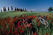 Radfahrer in toskanischer Landschaft, bei Pienza, Toskana, Italien
