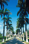 Allee, priv. West Indian Club, Grand Cayman, Cayman Islands Karibik