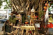 Old sacred tree, heilige Baum, Yangon, tree as shrine, surrounded by offerings, figures, Buddha, incense, Rangoon, Baum als Altar, mit Opfergaben, Weihrauch, Buddhas, Rangun