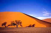 Morning in the Namib Desert, Namib Desert, Namibia, Africa
