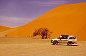 Safari at Namib Desert, Namib Desert, Namibia, Africa