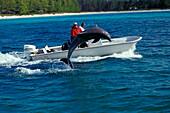 Boot and Delphin, Grand Bahama Bahamas