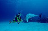 bottlenose dolphin and scuba diver, Tursiops truncatus, Bahamas, Caribbean Sea, Grand Bahama