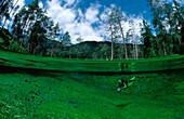 Gebirgs-Quelle, Gebirgssee und Taucher, spring, mo, mountain spring, mountain lake, scuba diver, split image